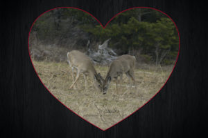 JD44873 DEER Heart copy 96dpi