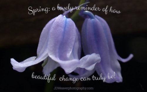 Spring Change P5050034_1