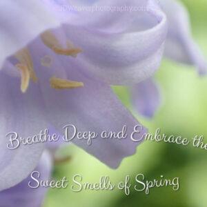 Sweet Smells of Spring