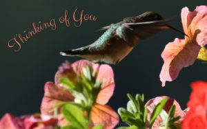 Thinking of You Hummingbird