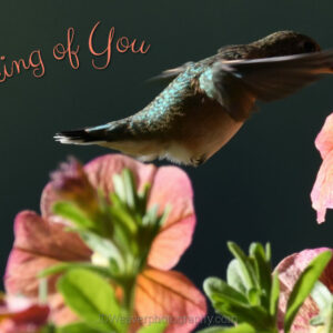Happy Hummingbird