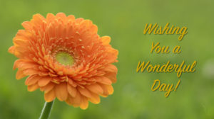 Wishing you a wonderful day orange daisy_1