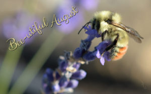 Bee-utiful August